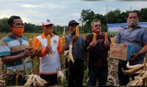 Bupati dan Wakil Bupati Sekadau Panen Raya Jagung Hibrida Milik Kelompok Tani Selalong 1 2