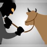 Dua Pencuri Kerbau di Kendawangan Diringkus Polisi 24