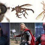 Spesies Serangga Baru di Australia Ini Sandang Nama-nama Tokoh Marvel