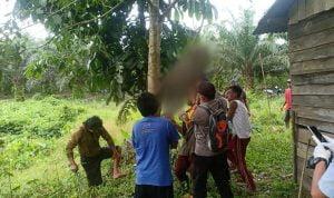 Seorang Petani di Tumbang Titi Ketapang Ditemukan Tewas Tergantung di Pohon Jengkol